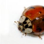 hello ladybug, de jude no Flickr
