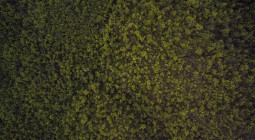 vista aérea de floresta